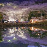 観音ヶ池は夜の姿も最高です